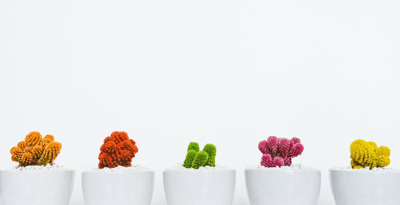 5 colourful cacti in a row